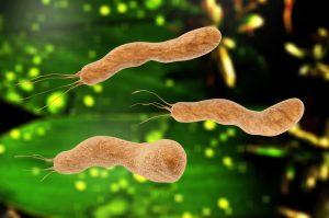 Điều bạn cần biết về vi khuẩn hp gây hôi miệng